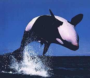 Image D Orque alimentaton de l'orque